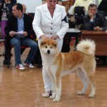 2° CLASSIFICATO AL RAGGRUPPAMENTO INT.DOG SHOW TARANTO