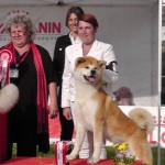 3° CLASSIFICATO AL RAGGRUPPAMENTO INT.DOG SHOW CASERTA