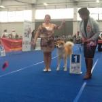 BOB INT.DOG SHOW REGGIO EMILIA 2012